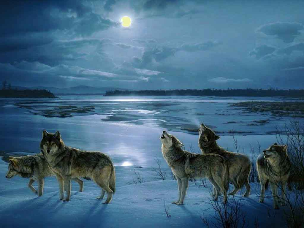 howling with the wolve...