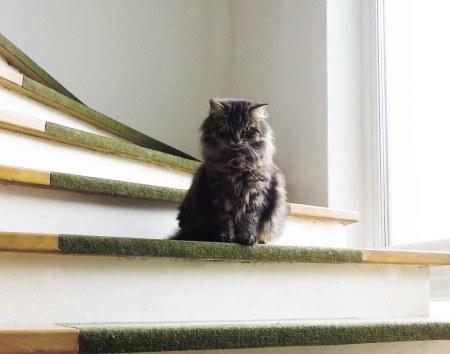 Wendy stairs DSCN0073
