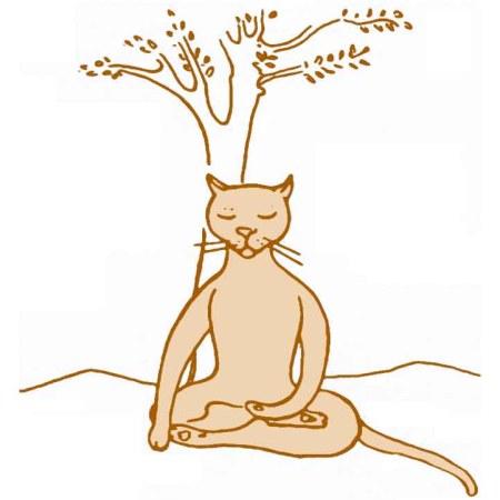 M7_cat-4 meditating big 3