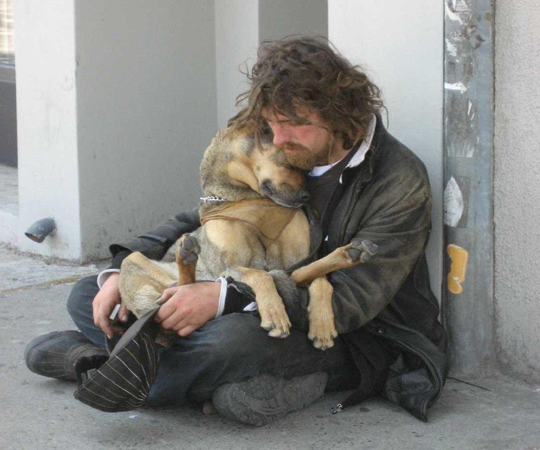 If i were a homeless dog