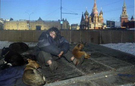1 homeless dogs cold spell