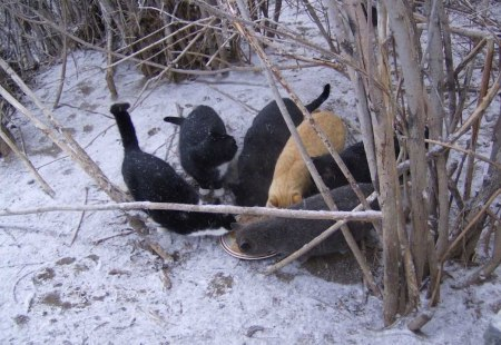 4 feral cats snow