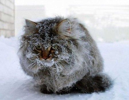 5 snow cat 1