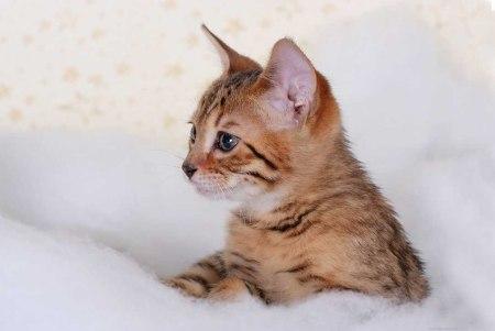 6 snow cat 2