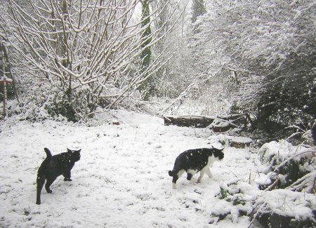 7 cats walking in snow