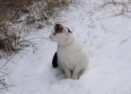 9 Ma Xi snow DSCN1093