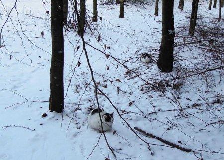 Min Ki Ma Xi snow DSCN1024