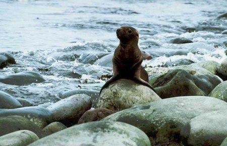 1 seal stones