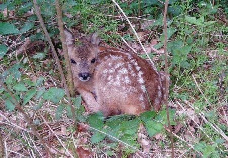 6 deer fawn