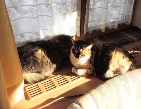 Rosy Wendy window sill DSCN0440