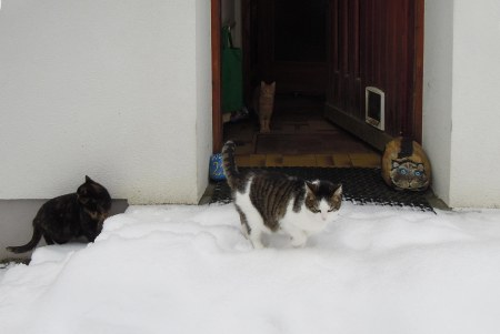cats front door snow B