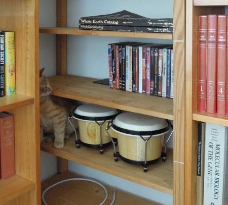 Gandhi Bookshelf DSCN2598 s