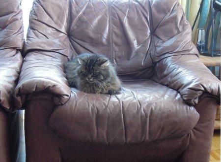 Wendy sofa DSCN2731