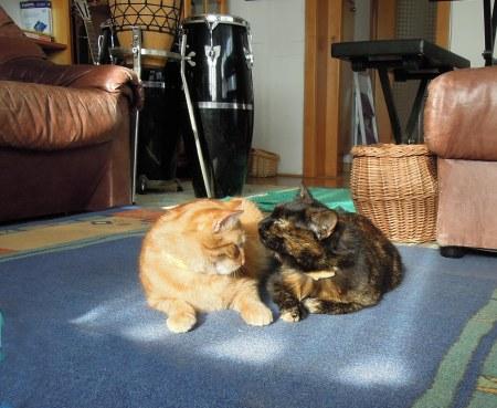 3 Gandhi Mia sitting room DSCN2782