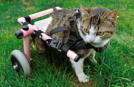 Brigitta wheel chair cat 3