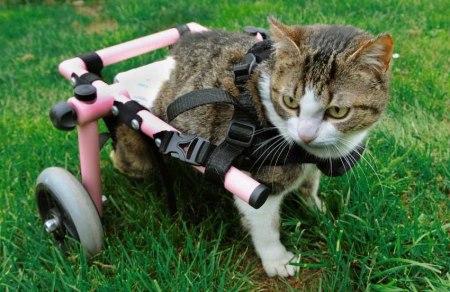 Brigitta wheel chair cat 3