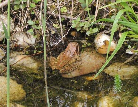 toad 2012 DSCN0142