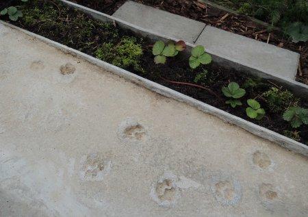 pawprints DSCN0869