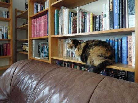 Rosy book shelf DSCN2833