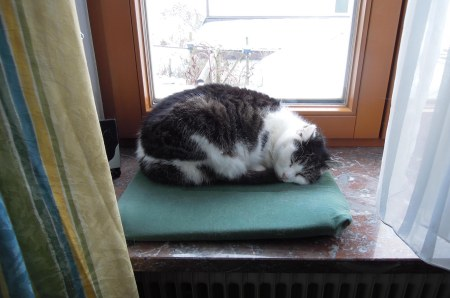 Sumo sleeping windowsill DSCN2586