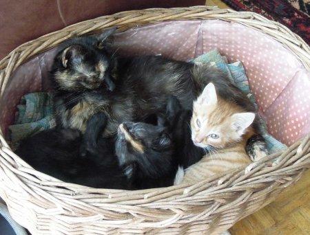 Mia + kitten basket DSCN1842