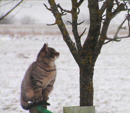 Cindy snow 02 24 2009