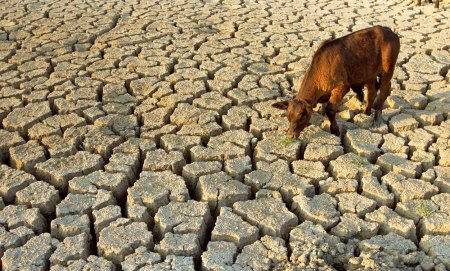drought water scarcity 15