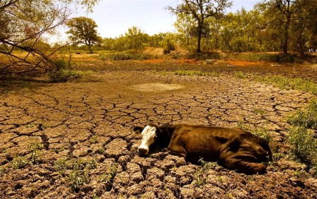 drought water scarcity 16
