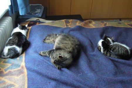 cats bed DSCN1194