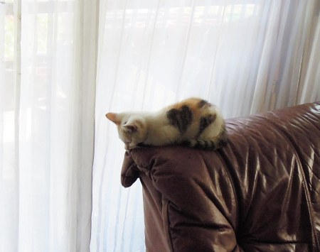 Linda couch DSCN3124