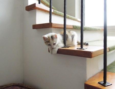 Linda stairs DSCN3144