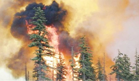forest fire 1a