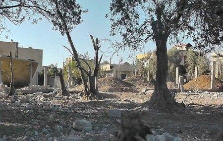 Syrian trees 1