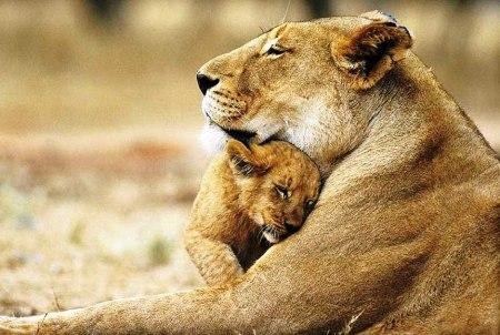 animal parents 30
