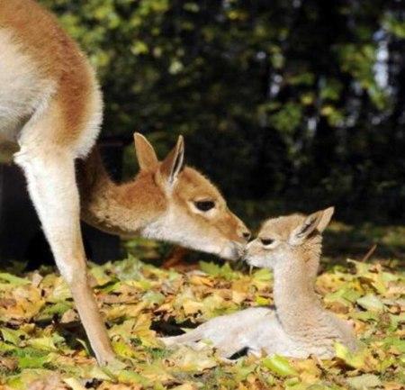 animal parents 59