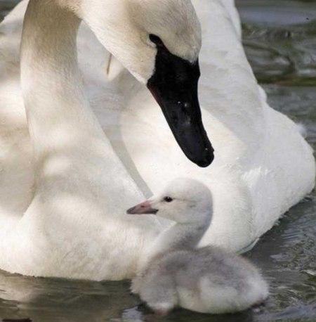 animal parents 60