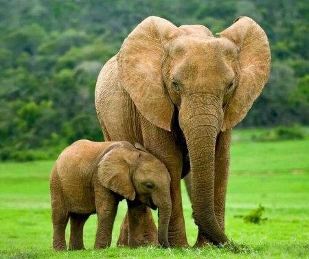 animal parents 82