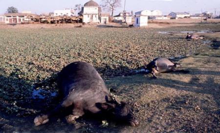 bhopal diseaster 21