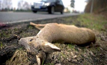 roadkill 12 2014 11