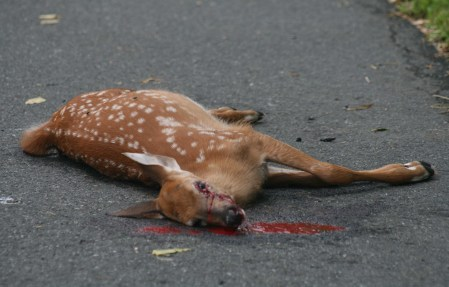 roadkill 12 2014 12