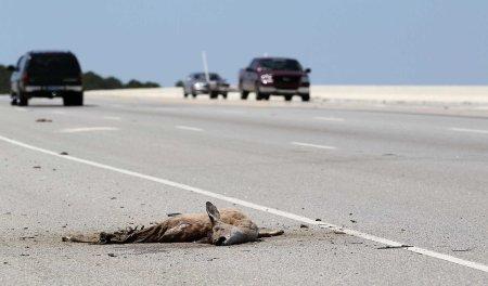 roadkill 12 2014 16