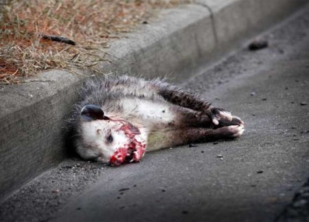 roadkill 12 2014 8