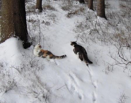 Linda Min Ki forest snow DSCN3431