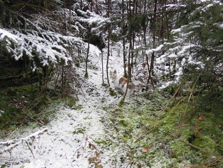 Lindas first winter 16