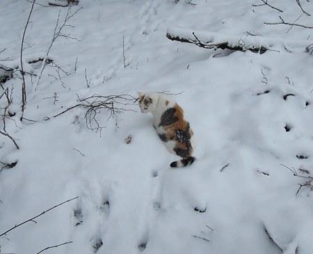 Lindas first winter 20