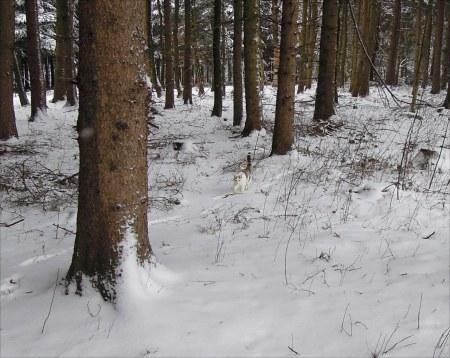 Lindas first winter 25
