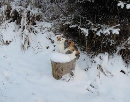 Lindas first winter 31