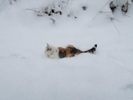 Lindas first winter 39