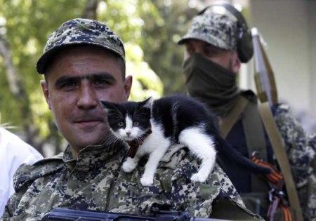 cat militia fighter
