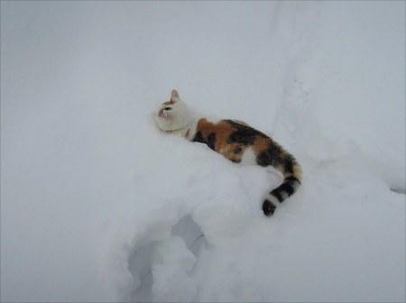 Linda deep snow DSCN3469